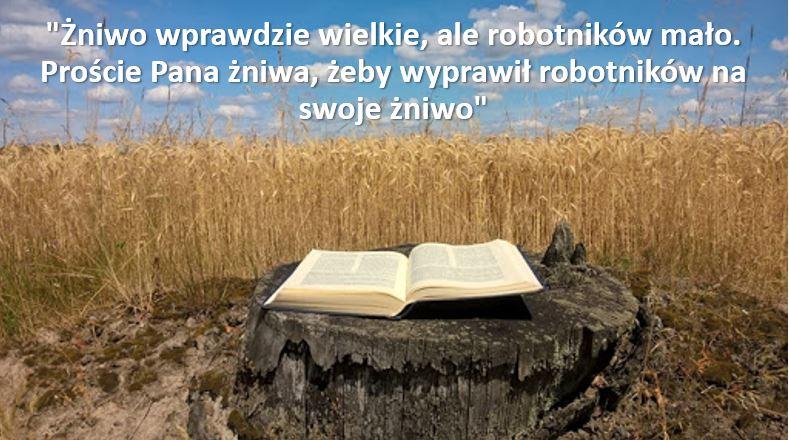 XI Niedziela Zwykła – 14 czerwca 2020 r.